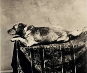 The Lincoln family dog, Fido.